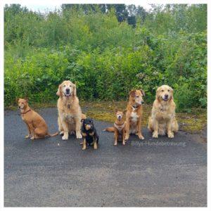 6 Hunde im sitzen