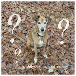 brauner Hund Mischling